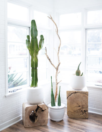 The Nest Salon | Cacti in the Sun