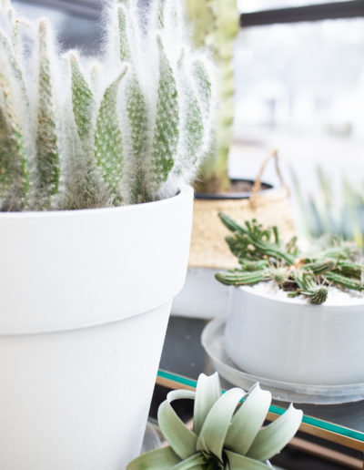The Nest Salon | Cacti in front window