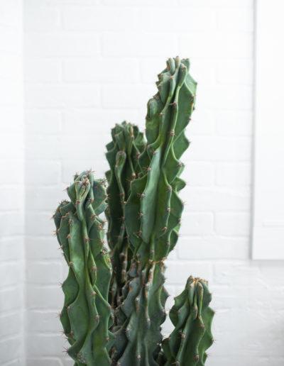 The Nest Salon | Cactus