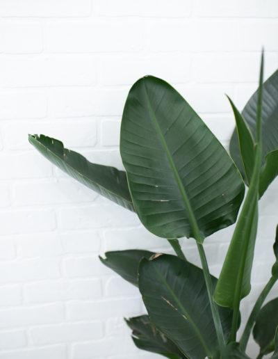 The Nest Salon | Tropical plant on brick wall