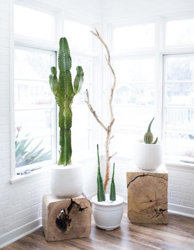 The Nest Salon | Cacti in the Sun